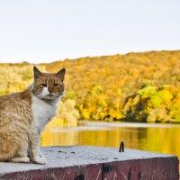 Рыжий кот и осень :: Ольга Винницкая (Olenka)