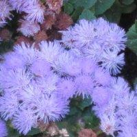 Цветы как кораллы :: Дмитрий Никитин