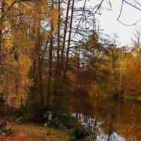 Очарование осеннего Штаде :: Nina Yudicheva