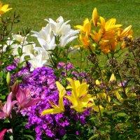 Разноцветие :: Татьяна Лобанова