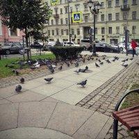 Городское собрание :: Liliya Kharlamova
