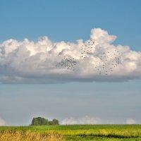 Зелёное поле, облако белое... :: Анатолий Клепешнёв