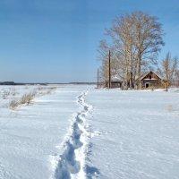 Моя тропинка к дому в начале зимы :: Светлана Рябова-Шатунова