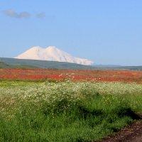 Гора Эльбрус из Предгорного района :: Eugine Sinkevich