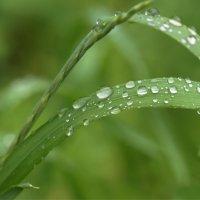 Летний дождик :: Наталия Григорьева