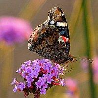 сказки лета для фотографа :: Олег Лукьянов