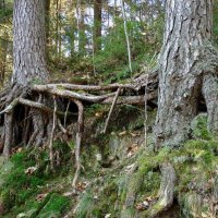 Деревья :: Liudmila LLF