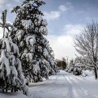 Парк зимой :: Валерий Баранчиков