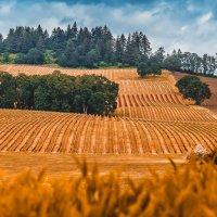 Oregon :: Andy Zav