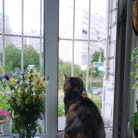 Кошка на окошке.... :: Анна Приходько