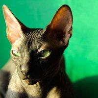 все тот же кот :: Марина Влади-на