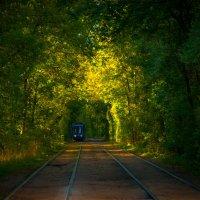 Трамвай на Тимирязевке :: Alexander Petrukhin