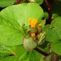 Вот такой интересный цветок... :: Galina194701