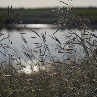 заброшенный пруд :: Александр Лепинский