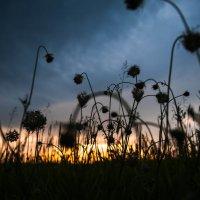 закат на лугу. :: Батик Табуев