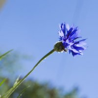 Конкурс «Фото цветов на фоне неба» Пост №1 :: Наталья (ShadeNataly) Мельник