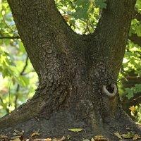 Дерево улитка :: Nikolai Martens