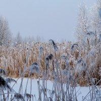 берег зимнего озера :: Александр Прокудин