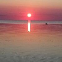 Ласточка над озером на закате :: BoxerMak Mak