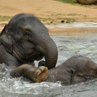 Банный день для слонёнка :: Татьяна Каневская