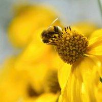 Пчелка :: Olcen Len