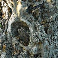 Ему подвластны тайны леса... :: Лесо-Вед (Баранов)