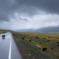 Подиум для коз :: Валерий Михмель