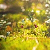 Лес чудес :: Мария Буданова