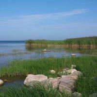 Утром у озера :: lady v.ekaterina