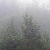 Туман. :: Вера Литвинова