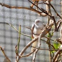 Птичка божия не знает ни заботы, ни труда :: Елена Гуляева (mashagulena)