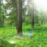 Русский лес :: Игорь Лобанов