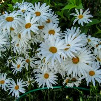 Буйное цветение 2 :: Елена Митряйкина
