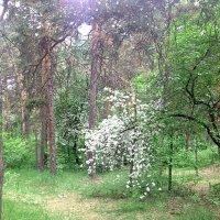 Весенний лес :: натальябонд бондаренко