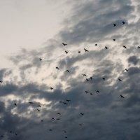 Птицы :: Максим