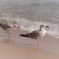 На берегу моря :: Swetlana V