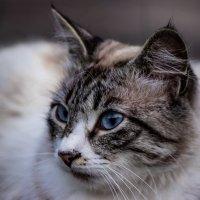 Котик :: Наталья Захарова