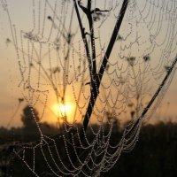 Авоська для солнца :: олег свирский