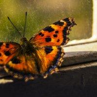Бабочка :: Данил Danya