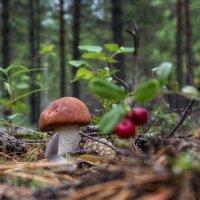 Параськины грибы :: Андрей Чуманов
