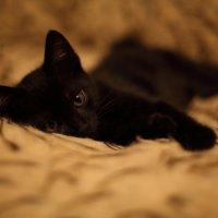 МОй_любимый_кот...)* :: Катюшка Максимова (Кусова)