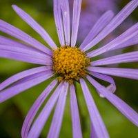 Flower :: Julia Julia