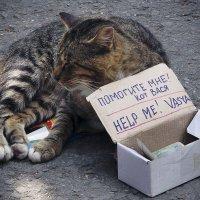 Помогите коту Васе! :: Олег Окселенко