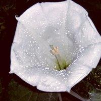 Ночное цветение... :: Роман *******