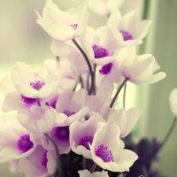 Первые весенние цветы... :: Olga Panova