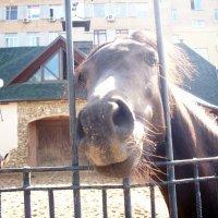 Лошадь :: Виктория Горячева