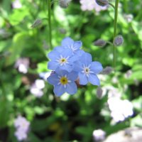 цветочек :: Asya0024 Русакомская