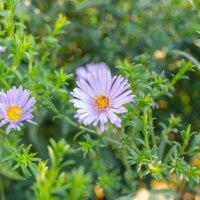 Цветы :: Виктор Белый
