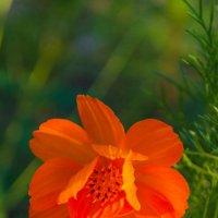 Цветок :: Виктор Белый