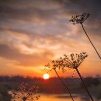 на фоне заката :: Дмитрий Симонов